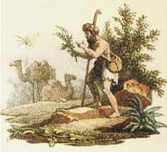 abyssinian shepherd