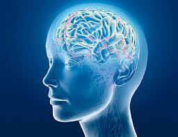 vliianie na kafeto varhu mozaka